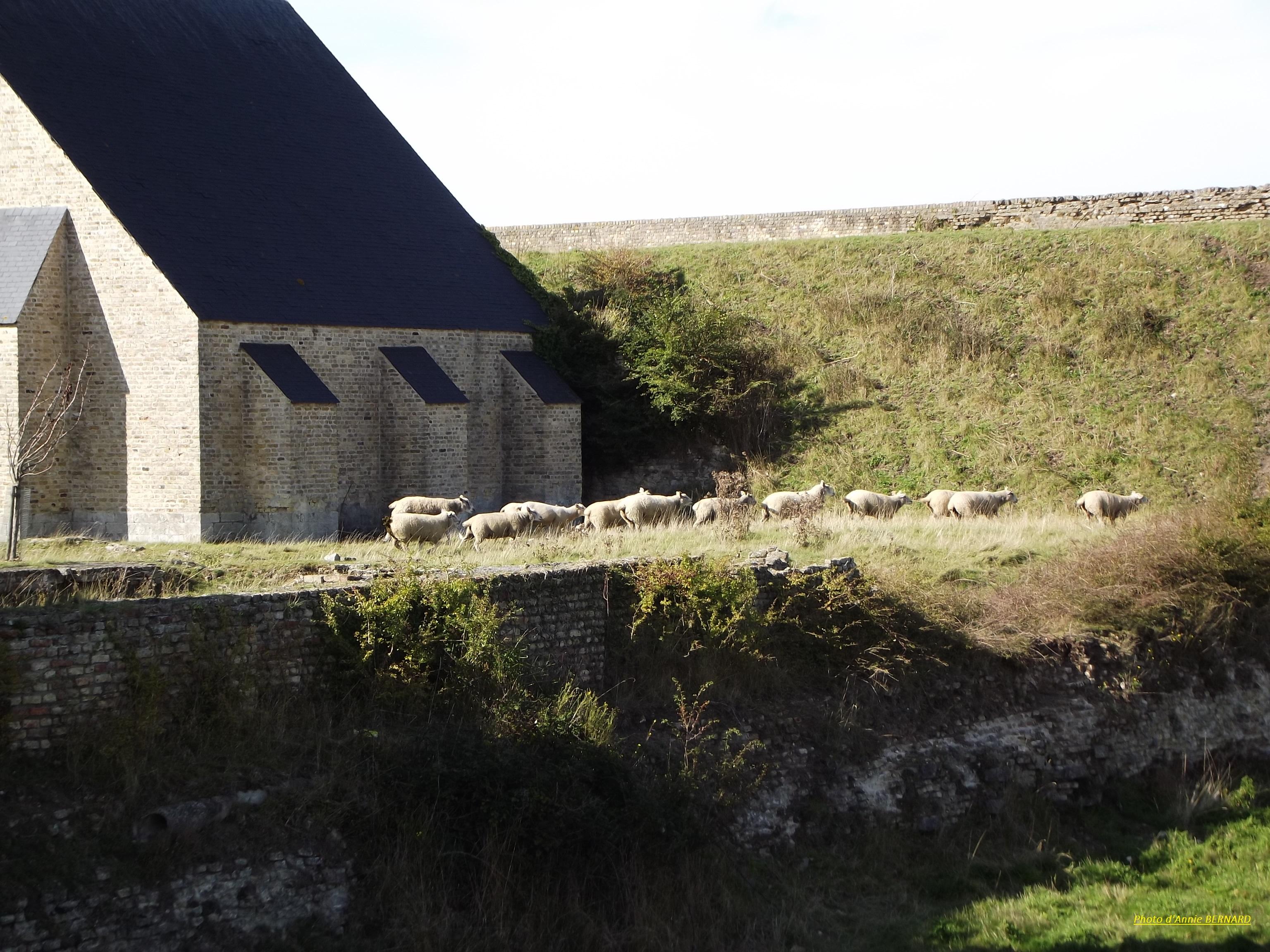 Des moutons en résidence sur le site