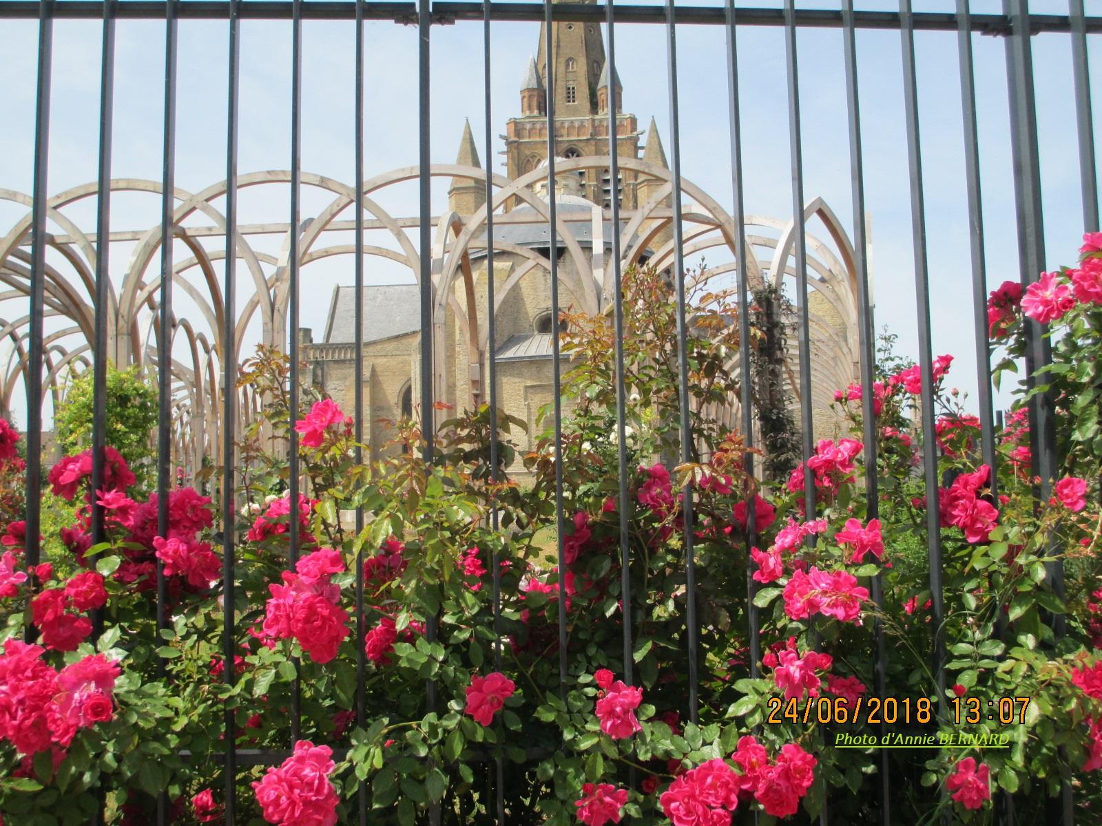 Rosiers à Notre-Dame