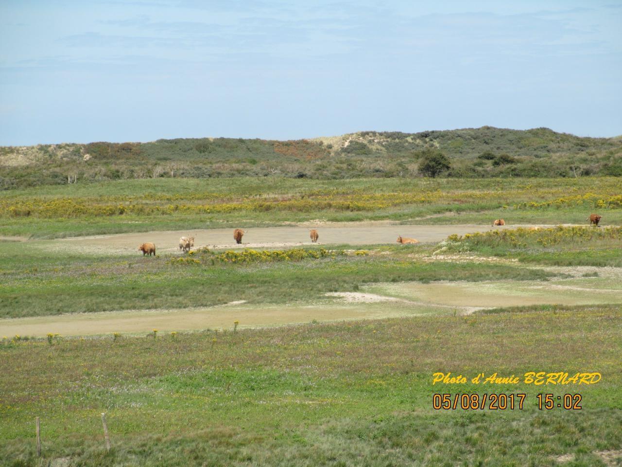 Animaux en liberté sur la réserve naturelle de Oye-Plage