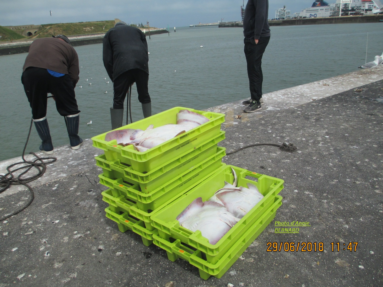 Retour de pêche sur le quai du Courgain Maritime