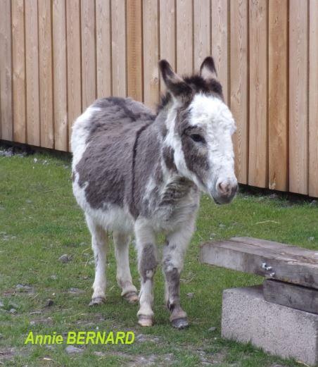 Un petit âne